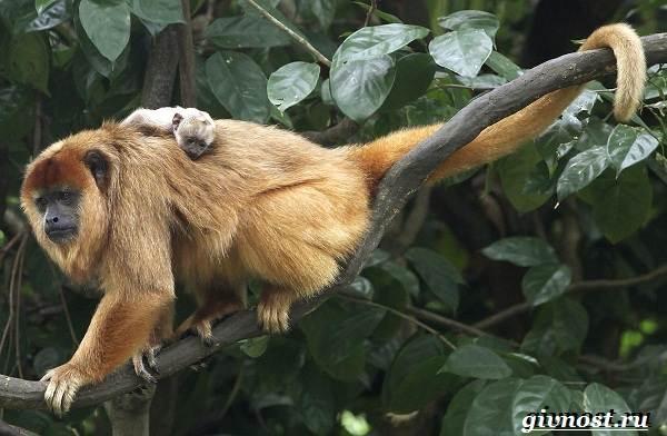 Животные-Южной-Америки-Описание-названия-и-виды-животных-Южной-Америки-54