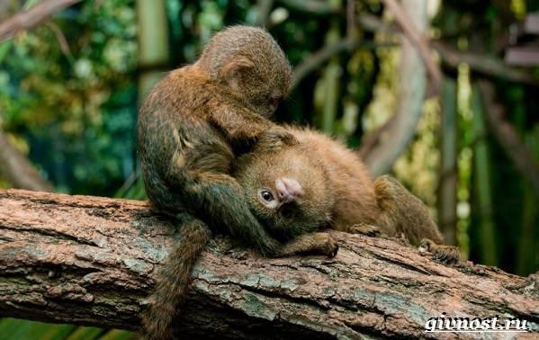 Животные-Южной-Америки-Описание-названия-и-виды-животных-Южной-Америки-59