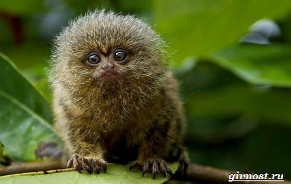 Животные-Южной-Америки-Описание-названия-и-виды-животных-Южной-Америки-60