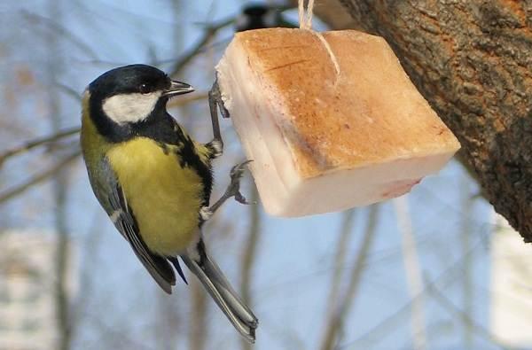 Зимующие-птицы-Названия-описания-и-особенности-зимующих-птиц-22