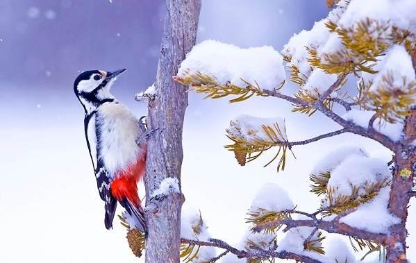 Зимующие-птицы-Названия-описания-и-особенности-зимующих-птиц-28