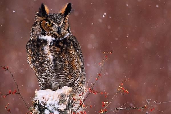 Зимующие-птицы-Названия-описания-и-особенности-зимующих-птиц-35