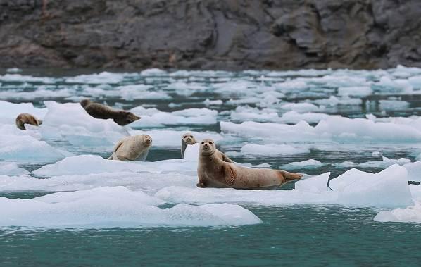 Животные-Антарктиды-Описание-и-особенности-животных-Антарктиды-19