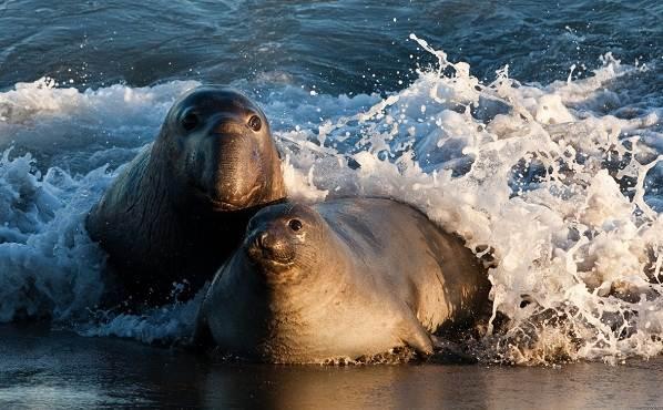 Животные-Антарктиды-Описание-и-особенности-животных-Антарктиды-20