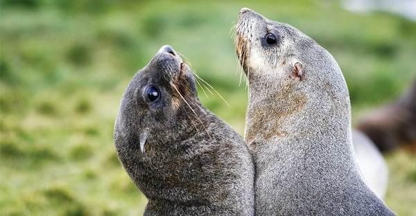 Животные-Антарктиды-Описание-и-особенности-животных-Антарктиды-30