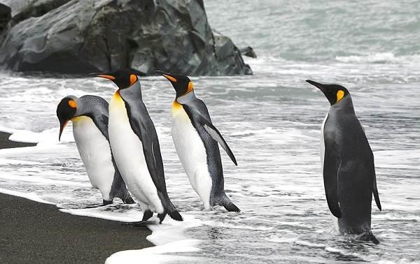Животные-Антарктиды-Описание-и-особенности-животных-Антарктиды-35