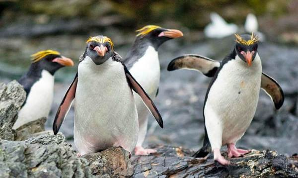 Животные-Антарктиды-Описание-и-особенности-животных-Антарктиды-39
