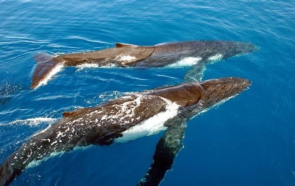 Животные-Антарктиды-Описание-и-особенности-животных-Антарктиды-4