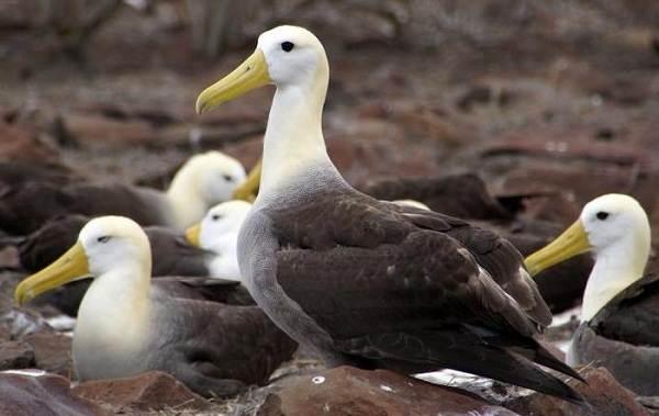 Животные-Антарктиды-Описание-и-особенности-животных-Антарктиды-43