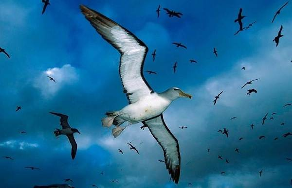 Животные-Антарктиды-Описание-и-особенности-животных-Антарктиды-44