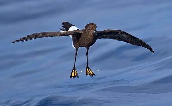 Животные-Антарктиды-Описание-и-особенности-животных-Антарктиды-49