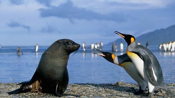 Животные-Антарктиды-Описание-и-особенности-животных-Антарктиды-50