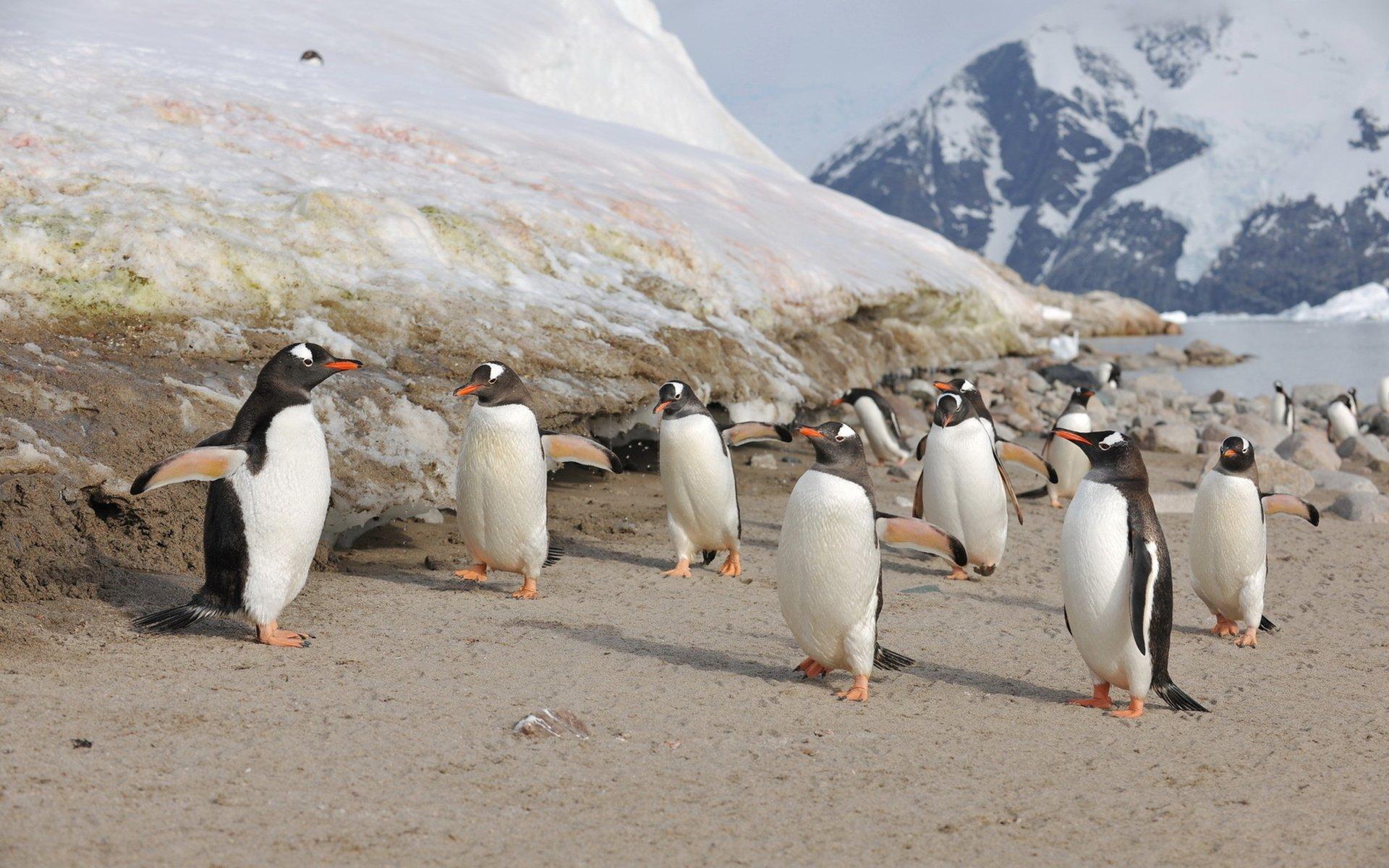 Животные-Антарктиды-Описание-и-особенности-животных-Антарктиды-52