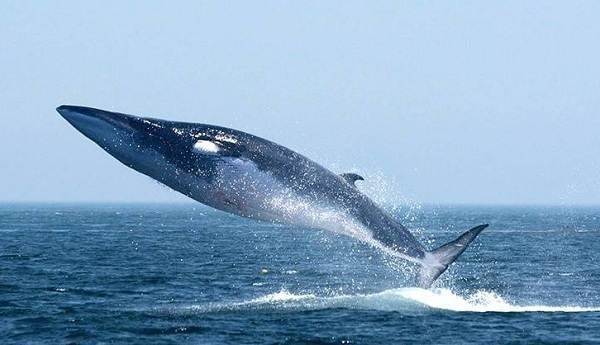 Животные-Антарктиды-Описание-и-особенности-животных-Антарктиды-6