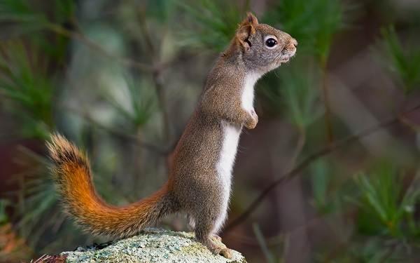 Животные-Крыма-Описания-названия-и-особенности-животных-Крыма-13