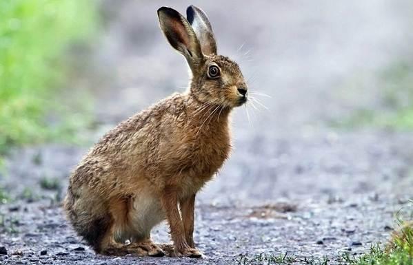 Животные-Крыма-Описания-названия-и-особенности-животных-Крыма-24
