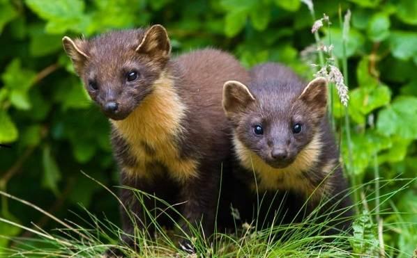 Животные-Крыма-Описания-названия-и-особенности-животных-Крыма-28