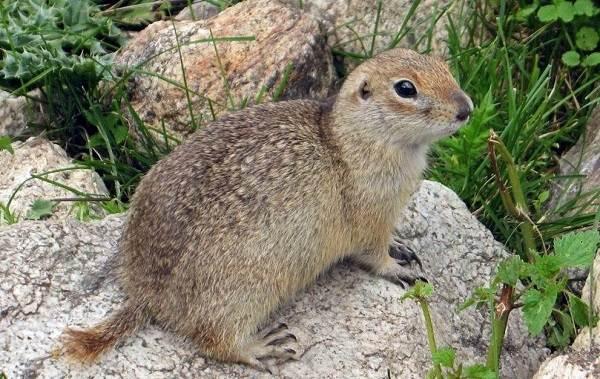Животные-Крыма-Описания-названия-и-особенности-животных-Крыма-3