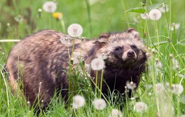 Животные-Крыма-Описания-названия-и-особенности-животных-Крыма-30