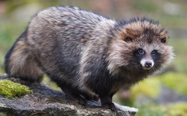 Животные-Крыма-Описания-названия-и-особенности-животных-Крыма-31