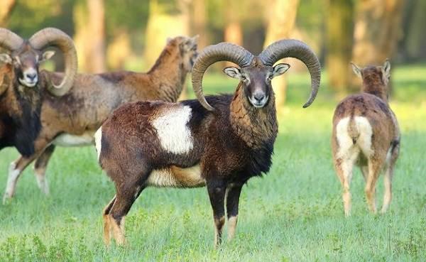 Животные-Крыма-Описания-названия-и-особенности-животных-Крыма-38