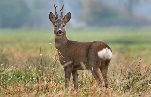 Животные-Крыма-Описания-названия-и-особенности-животных-Крыма-39