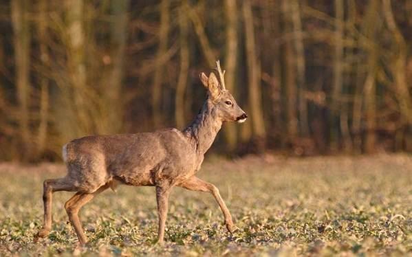 Животные-Крыма-Описания-названия-и-особенности-животных-Крыма-40