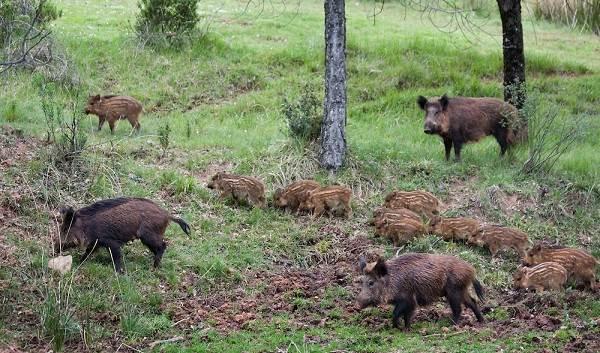 Животные-Крыма-Описания-названия-и-особенности-животных-Крыма-44