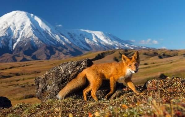 Животные-Крыма-Описания-названия-и-особенности-животных-Крыма-55