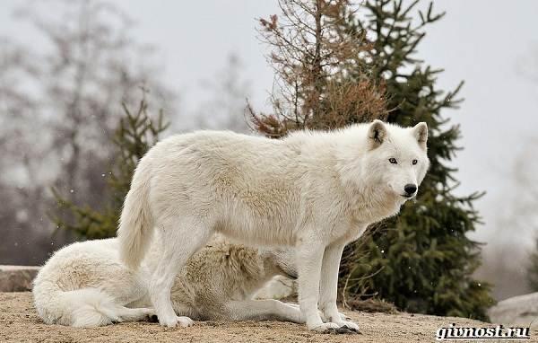 Животные-Северной-Америки-Описание-названия-и-виды-животных-Северной-Америки-16
