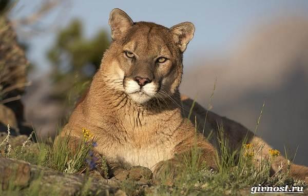 Животные-Северной-Америки-Описание-названия-и-виды-животных-Северной-Америки-2