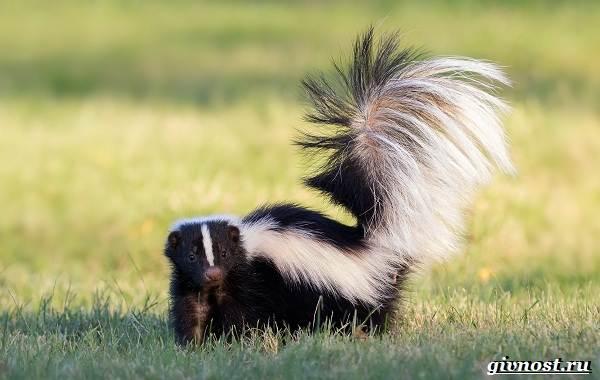 Животные-Северной-Америки-Описание-названия-и-виды-животных-Северной-Америки-22