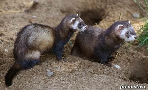 Животные-Северной-Америки-Описание-названия-и-виды-животных-Северной-Америки-23