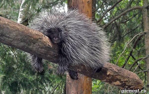 Животные-Северной-Америки-Описание-названия-и-виды-животных-Северной-Америки-25