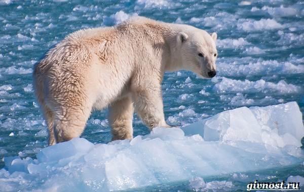 Животные-Северной-Америки-Описание-названия-и-виды-животных-Северной-Америки-5