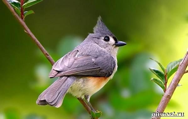 Животные-Северной-Америки-Описание-названия-и-виды-животных-Северной-Америки-56