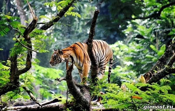 Животные-тропического-леса-Описание-названия-и-особенности-животных-тропического-леса-1