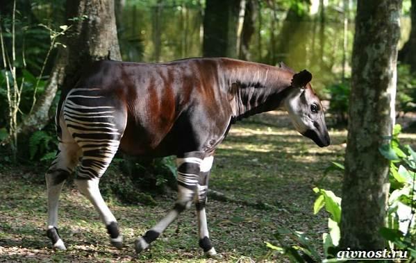 Животные-тропического-леса-Описание-названия-и-особенности-животных-тропического-леса-11