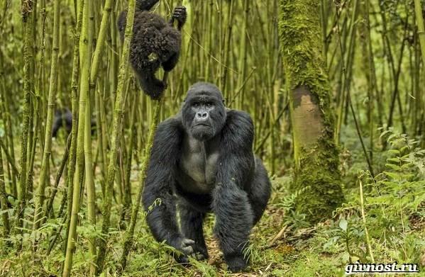 Животные-тропического-леса-Описание-названия-и-особенности-животных-тропического-леса-14