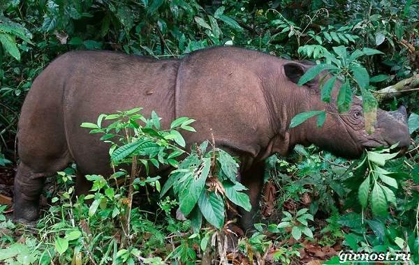 Животные-тропического-леса-Описание-названия-и-особенности-животных-тропического-леса-15