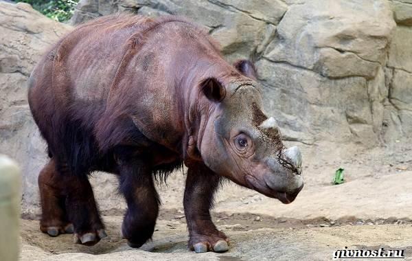 Животные-тропического-леса-Описание-названия-и-особенности-животных-тропического-леса-16