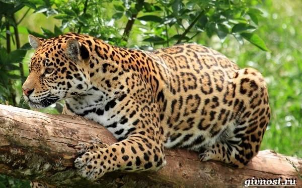 Животные-тропического-леса-Описание-названия-и-особенности-животных-тропического-леса-17