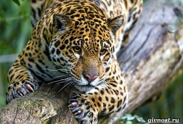 Животные-тропического-леса-Описание-названия-и-особенности-животных-тропического-леса-18
