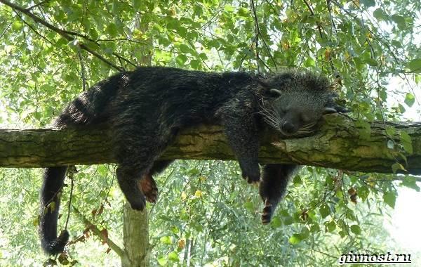 Животные-тропического-леса-Описание-названия-и-особенности-животных-тропического-леса-19