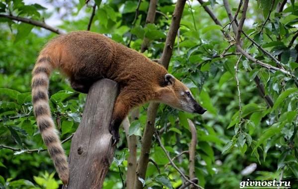 Животные-тропического-леса-Описание-названия-и-особенности-животных-тропического-леса-21