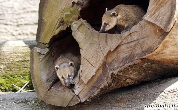 Животные-тропического-леса-Описание-названия-и-особенности-животных-тропического-леса-22