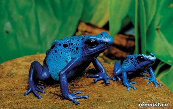 Животные-тропического-леса-Описание-названия-и-особенности-животных-тропического-леса-24