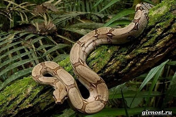 Животные-тропического-леса-Описание-названия-и-особенности-животных-тропического-леса-25
