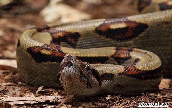 Животные-тропического-леса-Описание-названия-и-особенности-животных-тропического-леса-26