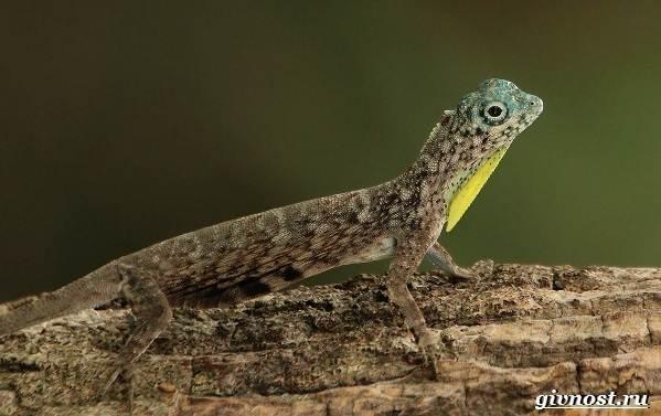 Животные-тропического-леса-Описание-названия-и-особенности-животных-тропического-леса-27